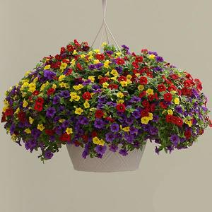 Sprinkles on Top combo Hanging Basket (c14)